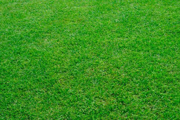 grass-seed-18D94A3DC-A99F-1196-D323-F92078CF206C.jpg