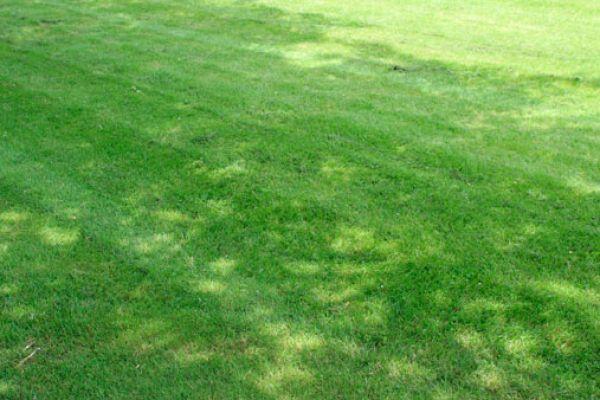 grass-seed-2FDD66B4A-E93C-6921-5605-8E45772DED37.jpg