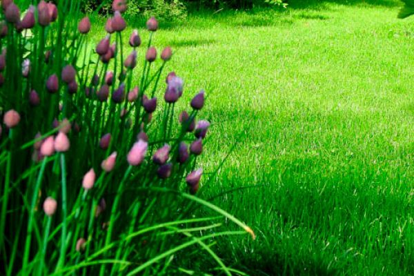 grass-seed-3577890DF-D6BD-AA71-AF75-EA8EAB79330B.jpg